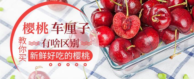 科普贴,樱桃车厘子有啥区别?教你买新鲜好吃的樱桃!