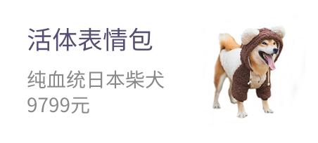 活体表情包 纯血统日本柴犬 9799元